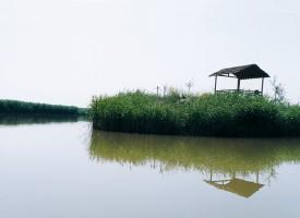 绿帐问茶 (1)