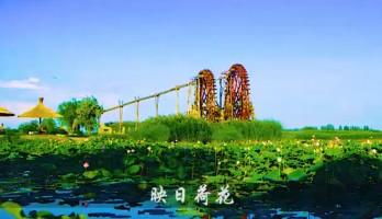 银川首届湿地生态文化旅游节