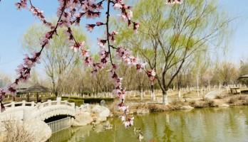 花开正好,攥住春光到鸣翠湖踏青吧!
